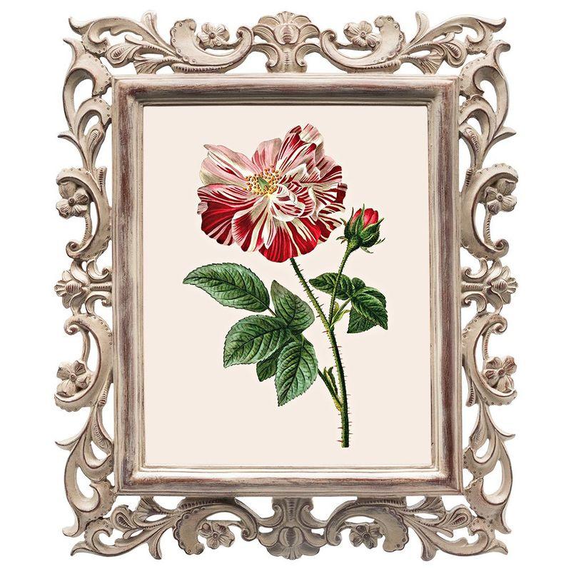 Картина Ботаническое Барокко 1048327256_1221